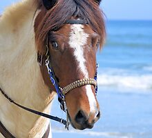 Horse At The Beach 1 by ©Dawne M. Dunton