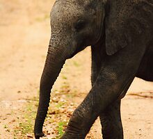Elephant calf by PBreedveld