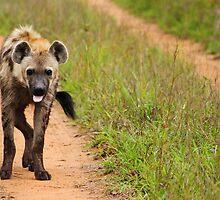 Hyena pulling toung by PBreedveld