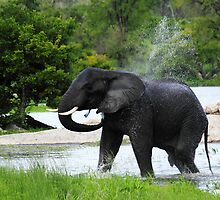 Splash elephant by PBreedveld