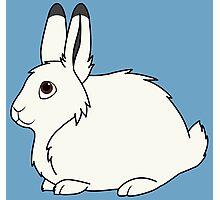 White Arctic Hare Photographic Print
