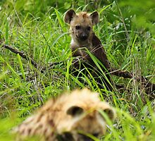 Hyena pups 1 by PBreedveld
