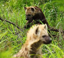 Hyena pups 2 by PBreedveld
