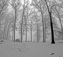 Snow Covered by jpsphotoart
