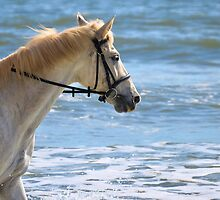 Horse At The Beach 3 by ©Dawne M. Dunton