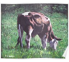 brown and white cow eating grass Poster
