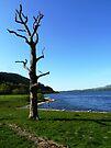 Bassenthwaite Lake, Cumbria #1 by Graham Geldard