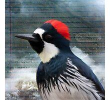 Bird Notes: Surf With Awareness Photographic Print