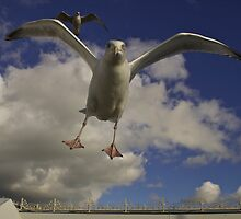 Seagull Attack by James Taylor
