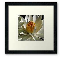 Pond Treasures ~ Part Ten Framed Print