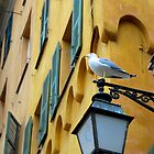Seagull in Old Nice | Nice, France by rubbish-art