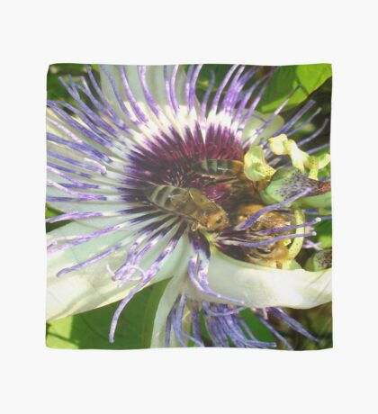 Close Up Of  Passion Flower with Honey Bee Scarf