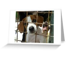 Choose me and I will be your best friend for life. Greeting Card