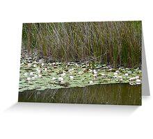 Monet in Australia? Waterlillies, Aussie style Greeting Card