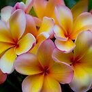 Frangipani 22Nov15 by Keith G. Hawley