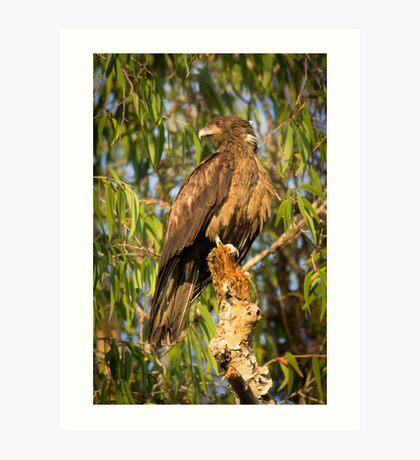 Kakadu Eagle Art Print