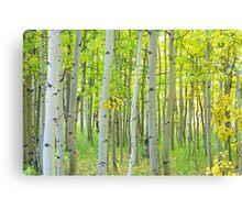 Aspen Tree Forest Autumn Time Canvas Print