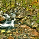 mountain stream by Steve