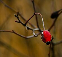 Seed Pod by Lee LaFontaine