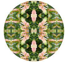 Natures Mandalas by Circe Lucas