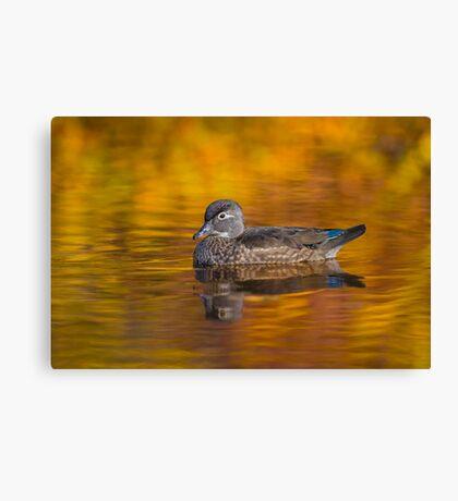 Fall Wood Duck Canvas Print
