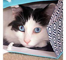 Big Blue Eyes! Photographic Print