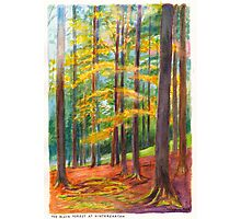 The Black Forest at Hinterzarten Photographic Print