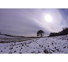 Sun Over A Lone Tree Photographic Print