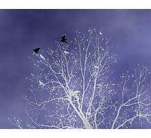 """The Watchmen"" Photographic Print"