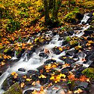 Autumn Staircase by DawsonImages