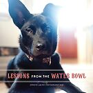 www.photolabpets.com by DesignLab