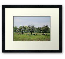Deer in Bushy Park, London Framed Print