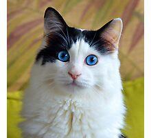 Wondering Kitty, Square Photographic Print