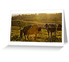 Cow Fields at Sunset Greeting Card