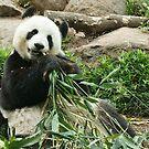 Wang Wang likes bamboo by roger smith
