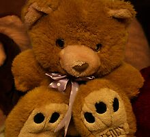 Teddy Waits For A New Owner by patjila