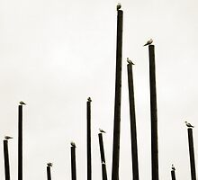 Gulls roosting against a grey sky by astralsid