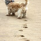 Pawprints in the Sand by JCMPhotos