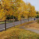 Neighborhood walk by Marjorie Wallace