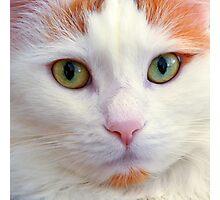 Cat's Eyes, Square Photographic Print