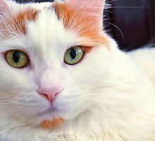 Cat's Eyes, Long by AlynnArts