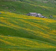 Panorama of yellow dandelions and green fields  by Michael Brewer