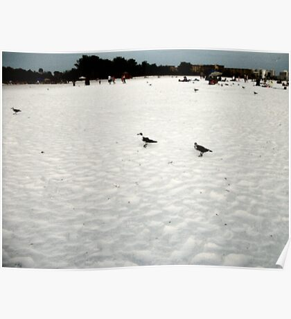 Lonely Seagulls Poster
