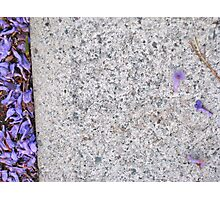 6/11 jacaranda days again Photographic Print