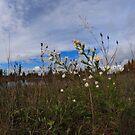 Flowers by bradydhebert