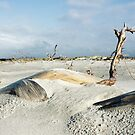 Driftwood Logans Lagoon by Andrew  Makowiecki