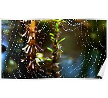 Spider and dew drops Poster