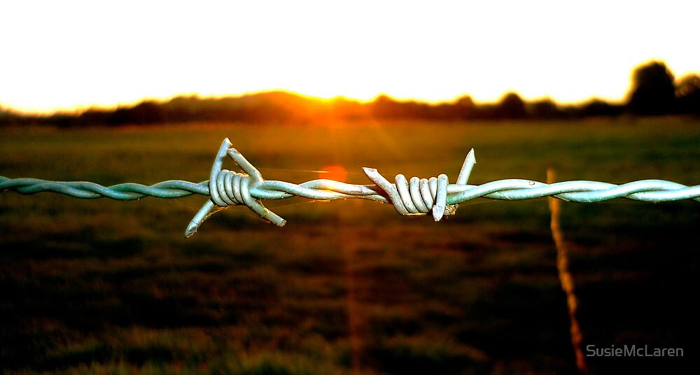 Barbed wire in the evening by SusieMcLaren