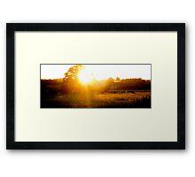 Cattle grazing in the sunlight Framed Print
