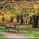 Farewell Autumn by KatMagic Photography
